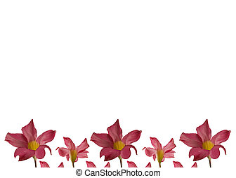día madres, flor rosa, marco