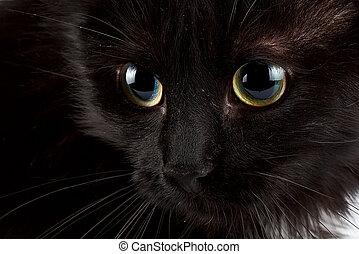dírka, o, jeden, temný devítiocasá kočka