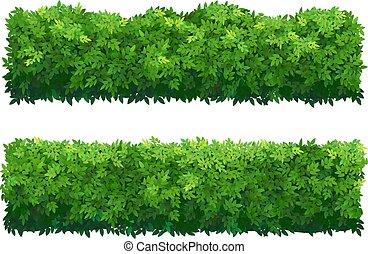 díszítő, kerítés, shrubs., buxus, zöld, plant.