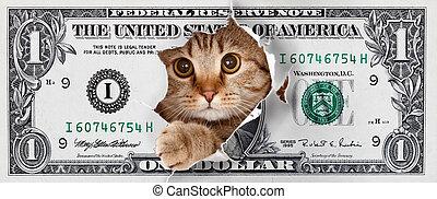 dólar, diseño, dinero, gato, uno, divertido