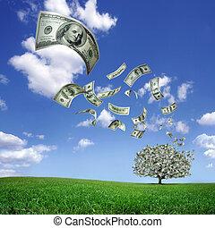 dólar, queda, contas, árvore, dinheiro