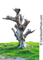 död, träd