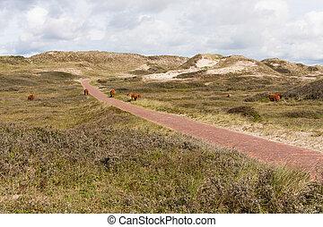 düne, landschaftsbild, in, der, netherland