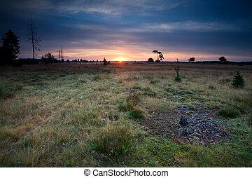 dünenlandschaft, aus, wiesen, sonnenaufgang