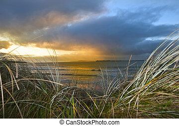 dünenlandschaft, beal, sand, sonnig, ansicht