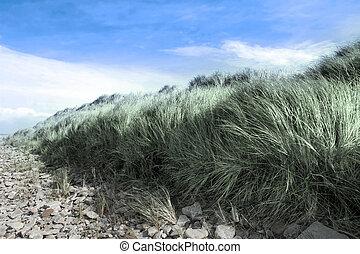 dünenlandschaft, sand, beale, steinen