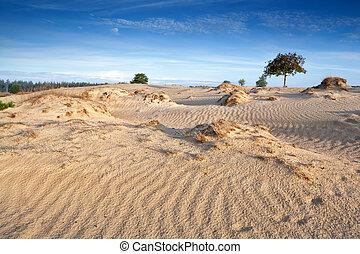 dünenlandschaft, sand, wind, beschaffenheit