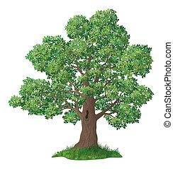 dąb, trawa, drzewo, zielony