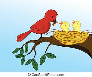 děťátko, krmení, ptáček, ji