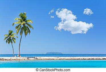 dłoń drzewa, na, tropikalna wyspa, na, ocean.