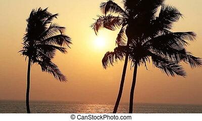 dłoń drzewa, sylwetka, na, zachód słońca