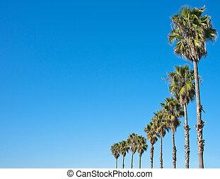 dłoń drzewo, błękitne niebo, ułożyć