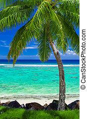 dłoń, jednorazowy, plaża, drzewo