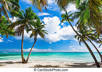 dłoń, karaibska plaża