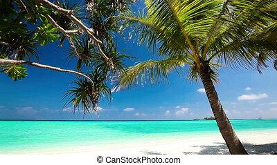 dłoń, na, laguna, tropikalny, drzewa