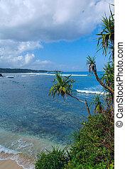 dłoń plaża, piaszczysty, wyspa