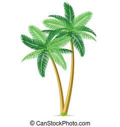 dłoń, tropikalny, drzewa