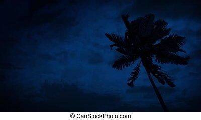 dłoń, wietrzny, drzewo, noc