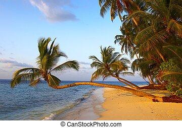 dłoń, zachód słońca, fantastyczny, plaża, drzewa