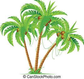 dłonie, trzy, orzech kokosowy