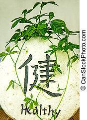 długowieczność, ziele, jiaogulan