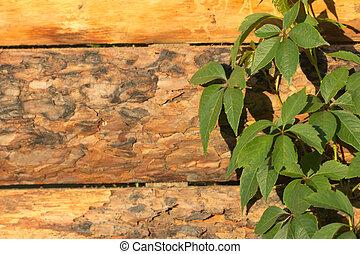 dřevěný, list, filiálka, grafické pozadí