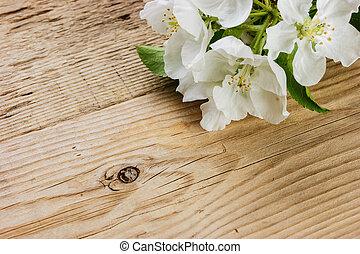 dřevěný, třešeň, filiálka, grafické pozadí, ptáček