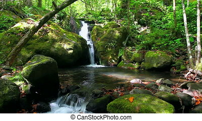dżungla, potok