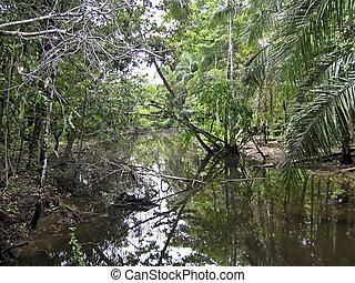 dżungla, w, przedimek określony przed rzeczownikami, amazonka, delta
