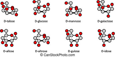 D-aldohexose sugars: allose, altrose, glucose, mannose,...