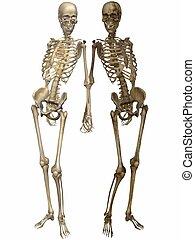 d, någonsin, -, 3, vänner, skelett