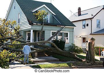 dañado, casa, de, árbol