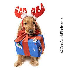 da, regalo, perro, cuernos