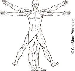 Da Vinci Style Vitruvian Man