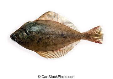 Dab Flounder - (Limanda limanda) Dab, Garve, Garve fluke,...
