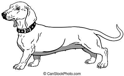 dachshund black white - dog smooth-haired dachshund...
