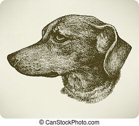 Dachshund dog breed, hand drawing. Vector illustration.