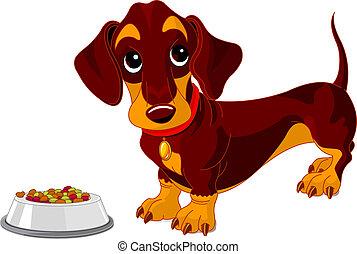 Cute dachshund dog near bowl of dog food