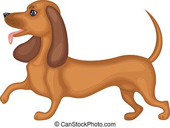 Dachshund dog - Cute brown dog breed dachshund running