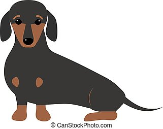 Dachshund dog playing purebred breed, brown puppy canine vector.