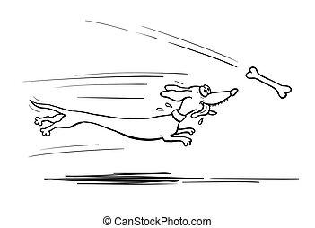 Dachshund dog running for bone