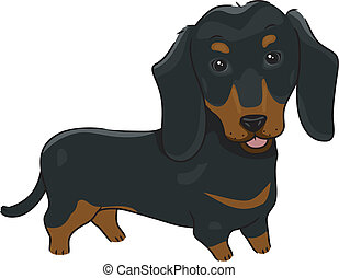 Dachshund - Illustration Featuring a Cute and Friendly...