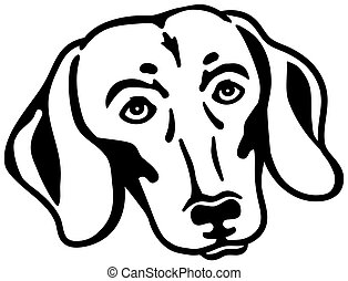 Dachshund head black white