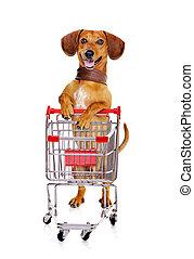 dachshund hund, stehende , neben, der, einkaufswagen