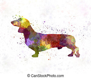 dachshund, in, aquarell