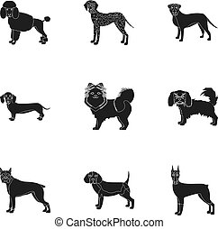 Dachshund, laika, poodle and other web icon in black style. Boxer, rottweiler, bulldog, icons in set collection.