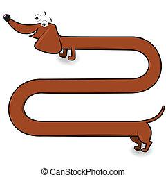 Dachshund - Long dachshund