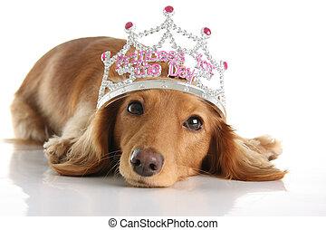Dachshund princess - Dachshund wearing a princess crown. ...