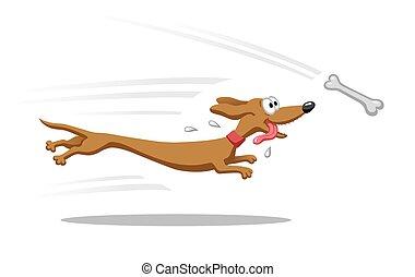 Dachshund running for bone