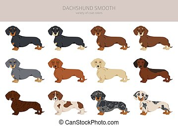 Dachshund short haired clipart. Different poses, coat colors set.  Vector illustration